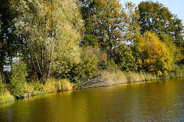 Aber wenn es Herbst ist..... von Corine Frelink