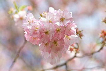 Bloesem / blossom van Carla Odink