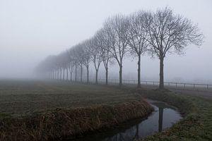 Beuningen 28-02-2021. Landschaft am Rande von Beuningen in Maas und Waal. Mit Graben und Baumreihe i von Ger Loeffen