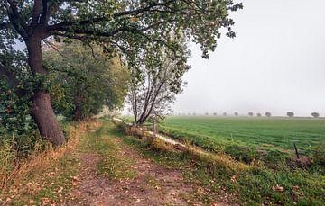 Meanderend voetpad door een natuurgebied langs een sloot op een dag met vroege ochtendmist in het Ne van Ruud Morijn