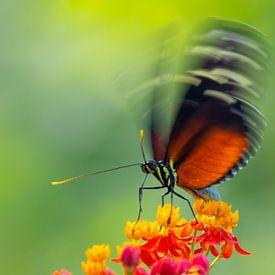 Schmetterling von Patrick van Oostrom