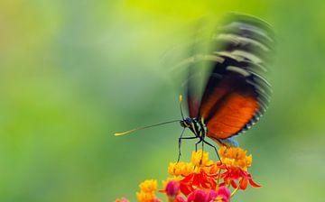 Papillon sur