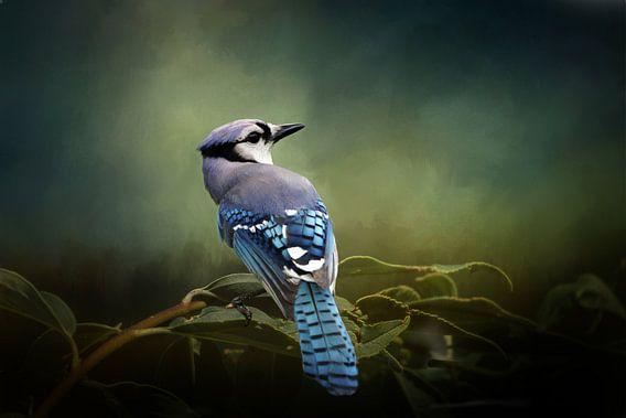 Blauwe Gaai - Vogel Op Tak Met Groene Bladeren