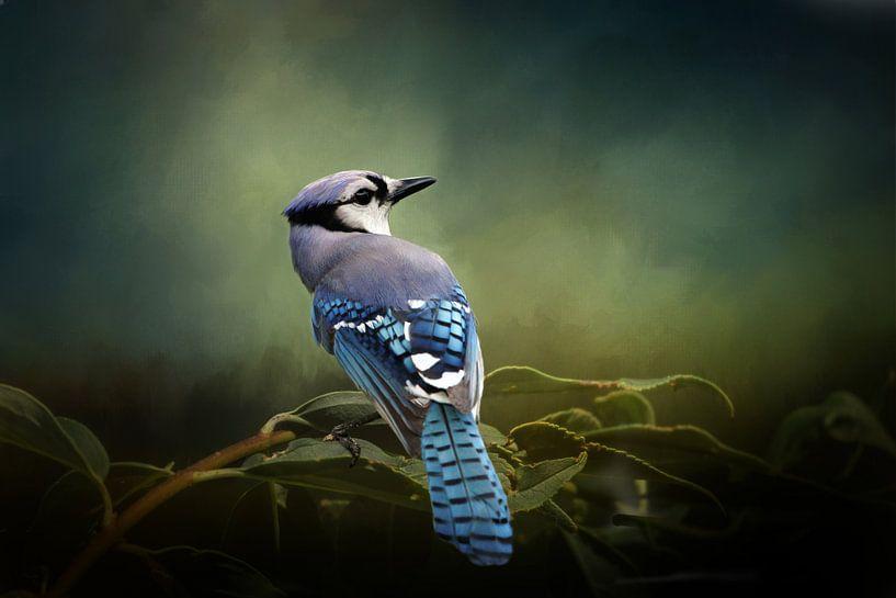 Blauwe Gaai - Vogel Op Tak Met Groene Bladeren van Diana van Tankeren