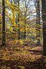 Herfst in het bos 02 van Geertjan Plooijer thumbnail