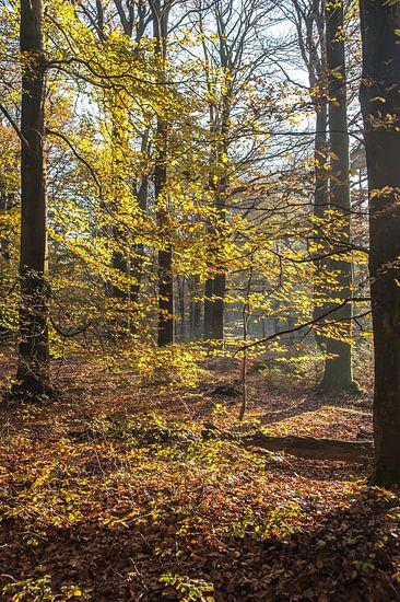 Herfst in het bos 02 van Geertjan Plooijer