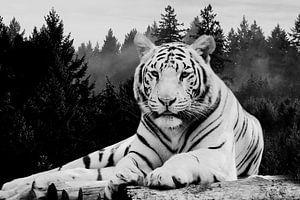 Tiger Wald von Mateo