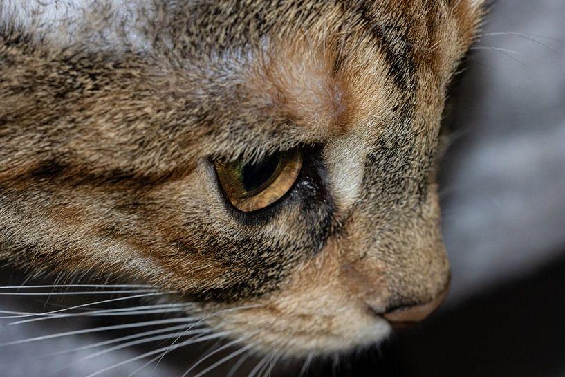 Katze Gesicht von Erik Spijkerman