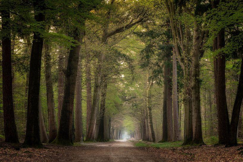 Tunnel of love van Jos Erkamp