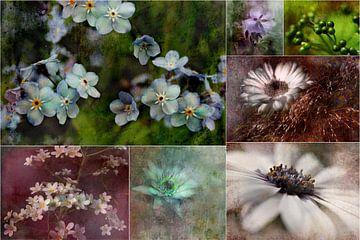 Collage - Schönheit der Natur von Claudia Gründler