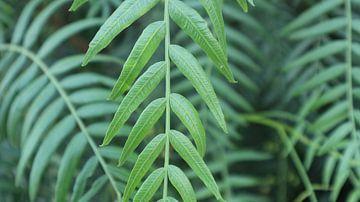 Tarzans groene draad van Simone van Heumen