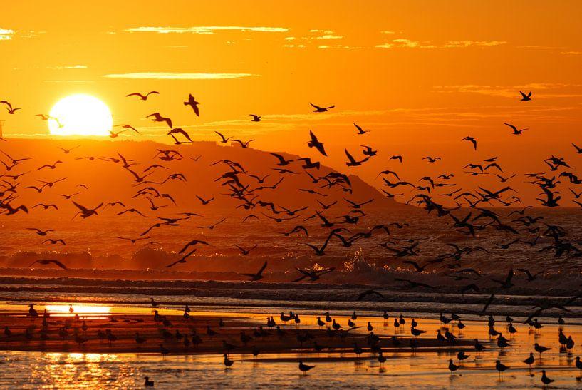Vogels bij zonsondergang van Hetwie van der Putten