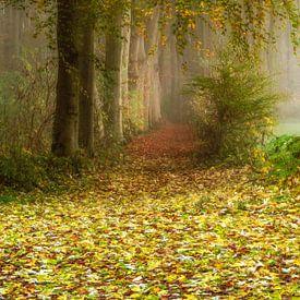 Poetischer Waldweg von Lars van de Goor