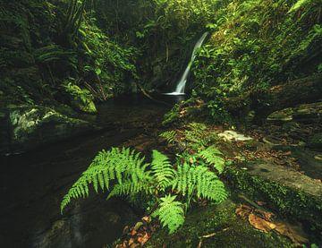 Asturien Wasserfall im Wald Cascada Gorgollon von Jean Claude Castor