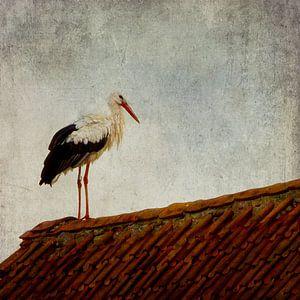 Stork/Ooievaar