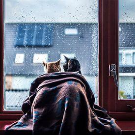 Katten Tijdens De Regen van Felicity Berkleef