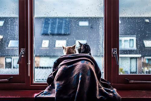Katten Tijdens De Regen van