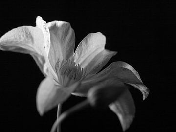 Stille schoonheid van