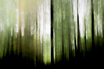 Woud in avondlicht van Tilja Jansma