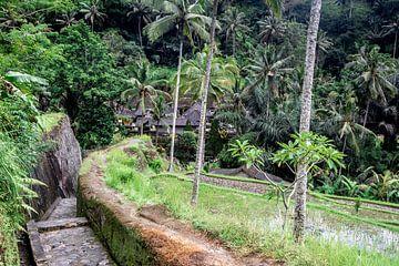 Straße zwischen den Reisfeldern zu den Tempeln von Mickéle Godderis