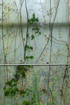 Fenêtre Urbex 1 de 3 - vert