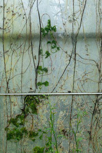 Urbex raam 1 van 3 - groen