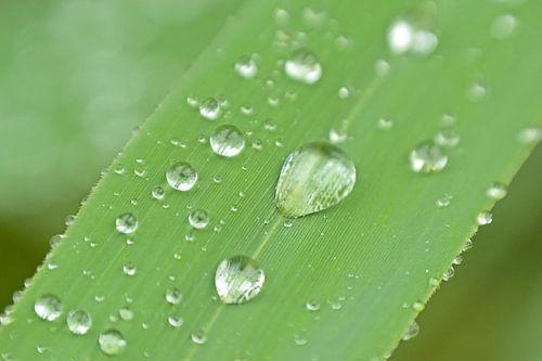 Macro van regendruppels op een grashalm