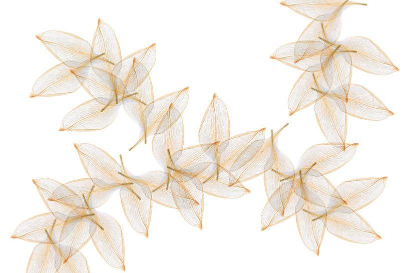 Blätter von Klaartje Majoor