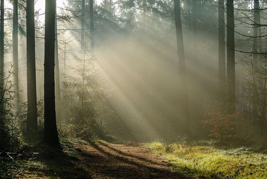Pijnenburg, mistig bos met zonnestralen op het pad