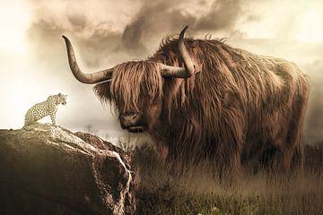 Ein schottischer Highlander und ein Leopard in einem schönen Licht von Bert Hooijer