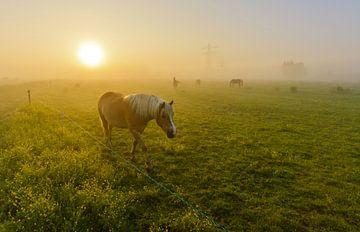 Paard in mistig landschap von Remco Van Daalen
