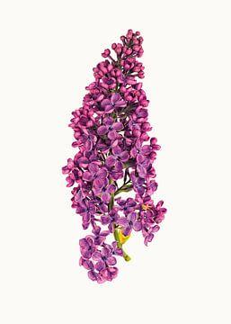 Curiosity Cabinet_Flowers_06 sur Marielle Leenders