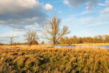 Jantjesplaat Biesbosch van Ruud Morijn