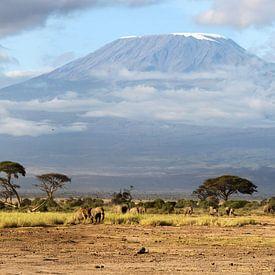 Unique Large XXL Amboseli Kenya view van Roland Smeets