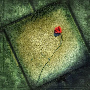 Poppy von Rob van der Pijll