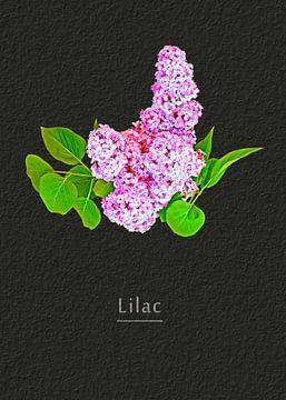 Lilac van Leopold Brix