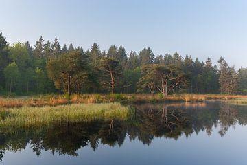 Wald auf einem Moor in der Drentsche-Natur von Jan Duker