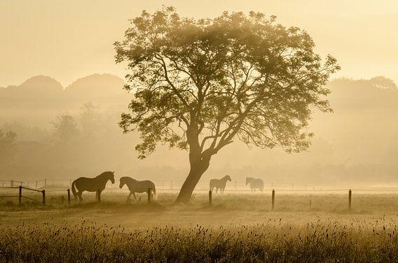 Paarden in de mist -3 van Richard Guijt