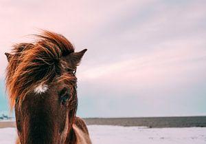 Paardje in de wind