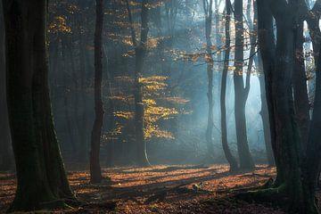 Shimmering Grove van Daniel Laan