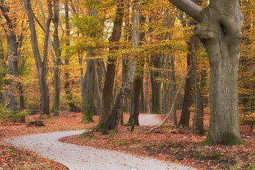 Sich windender Fahrradweg durch den Speulderbos von Cor de Hamer