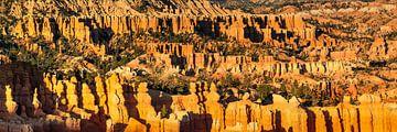 Bryce Amphitheatre bij zonsondergang, Bryce Canyon, VS van Markus Lange