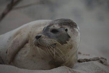 Zieke Zeehond van R Driessen