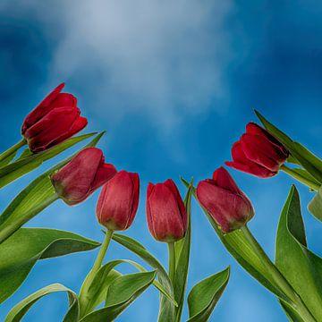 Tulpen von unten... von Klaartje Majoor