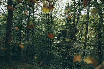 Vallende bladeren sur