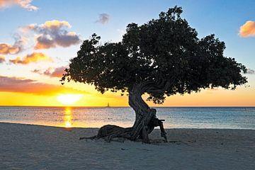 Dividivi boom op Aruba bij zonsondergang in de Caribbean van Nisangha Masselink