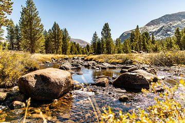 Zonnige Yosemite National park van