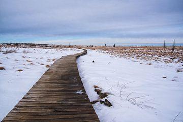 het wandelpad in de winter van Robin van Maanen