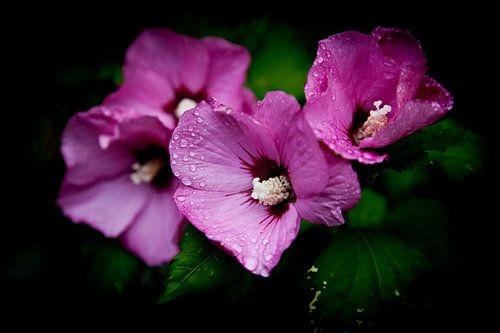Wilde bloemen na regen van