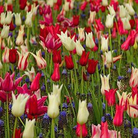 Keukenhof serie - tulpen van Wilma Overwijn
